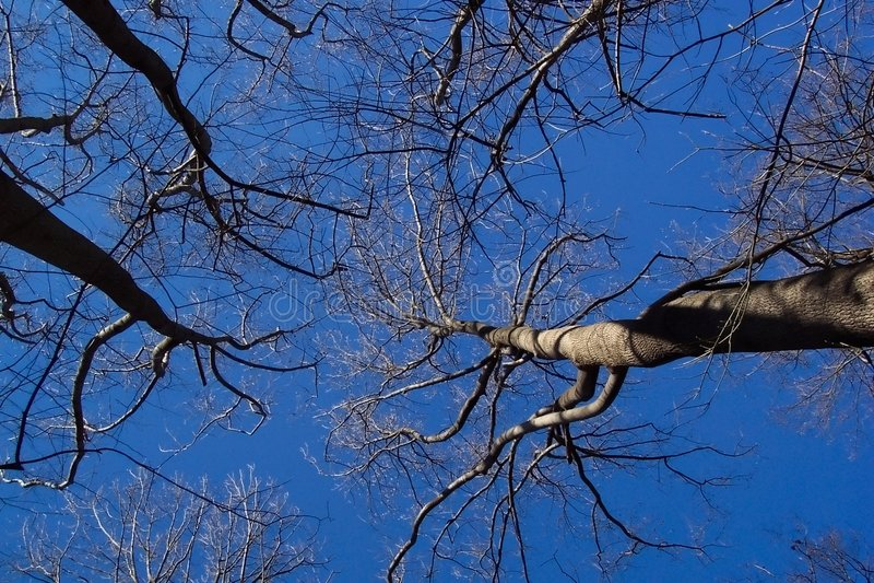 Download Bloße Winter-Bäume stockfoto. Bild von jahre, weihnachten - 45258