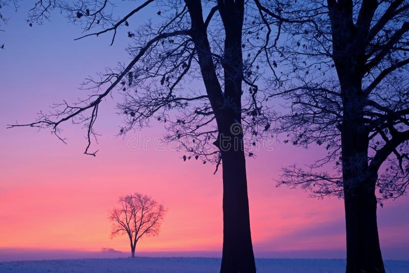 Bloße Winter-Bäume an der Dämmerung lizenzfreie stockfotografie