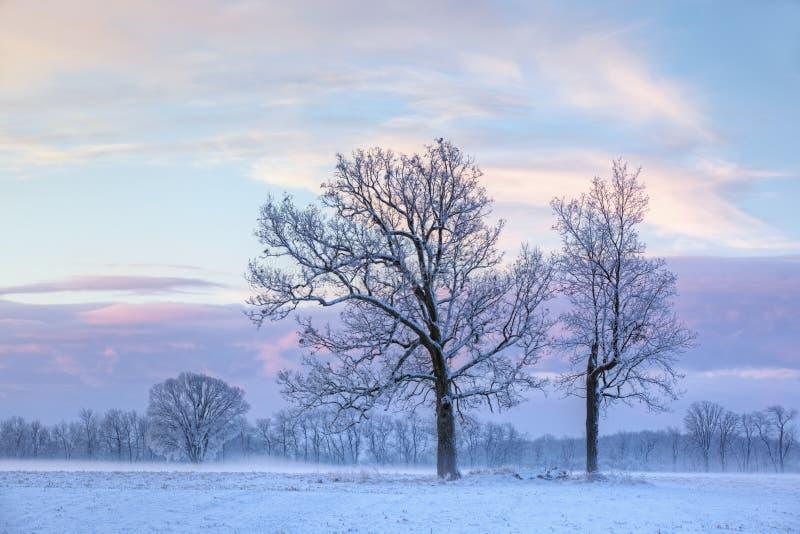 Bloße Winter-Bäume an der Dämmerung lizenzfreie stockfotos