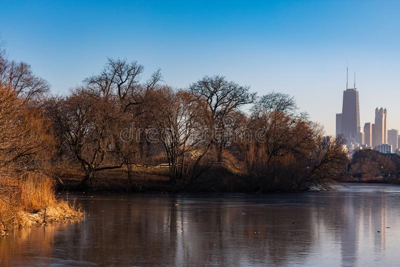Bloße Winter-Bäume entlang Nordteich mit den Chicago-Skylinen in Lincoln Park stockbilder