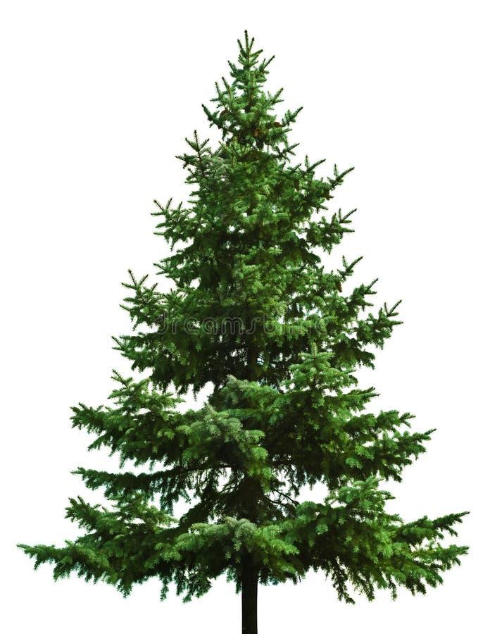 Bloßer Weihnachtsbaum stockbild