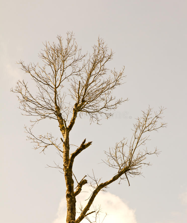 Bloßer Zweig des Baums lizenzfreies stockfoto