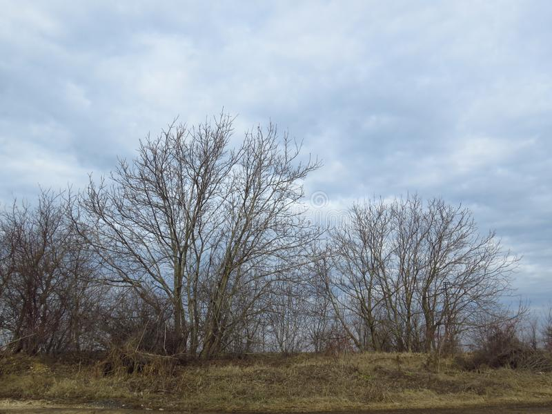 Bloße blattlose Bäume und blauer Himmel mit weißen Wolken Natürliches Herbstwintervorfrühlings-Ansicht landskape lizenzfreies stockbild