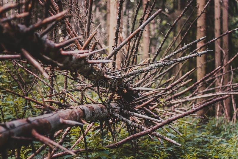 Bloße Niederlassungen auf gefallenem Baum lizenzfreies stockbild