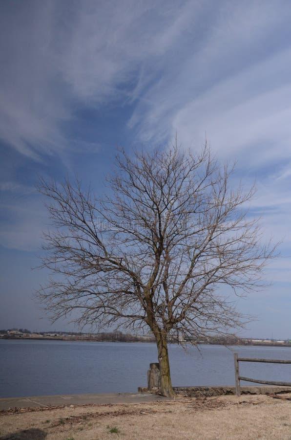 Blo?er Baum stockbilder