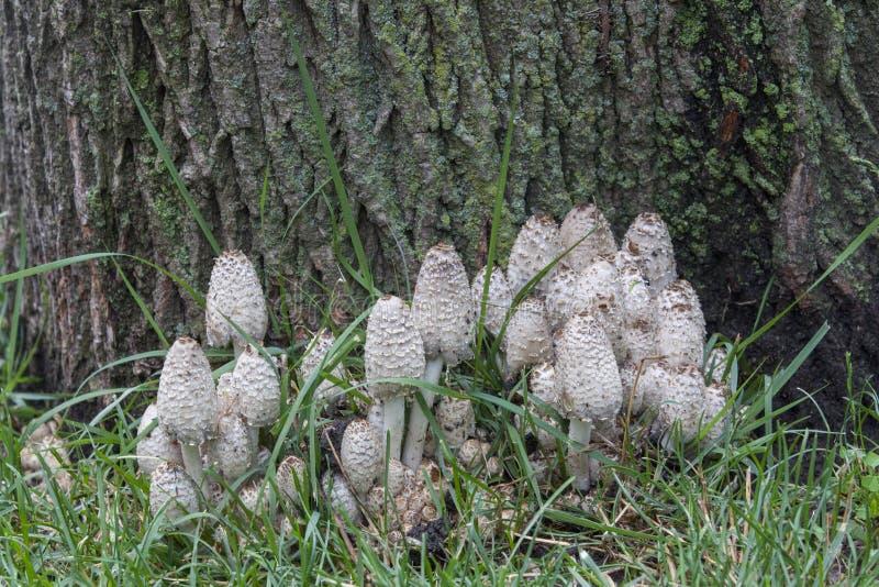 Bloc de champignon avec l'écorce d'arbre moussue photo stock
