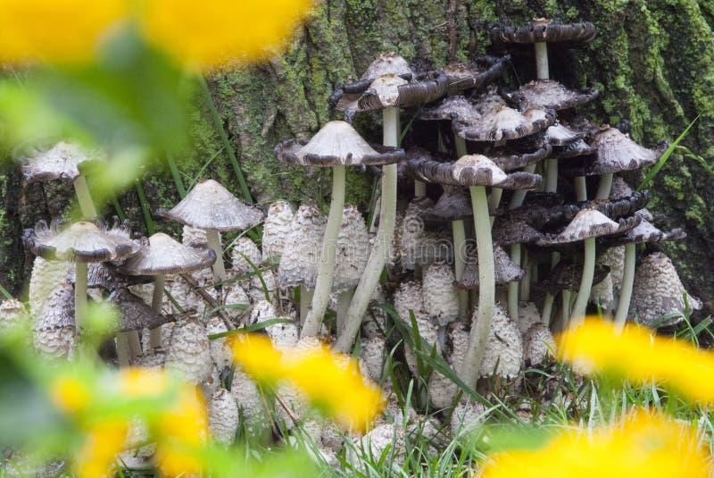 Bloc de champignon par des fleurs photos stock