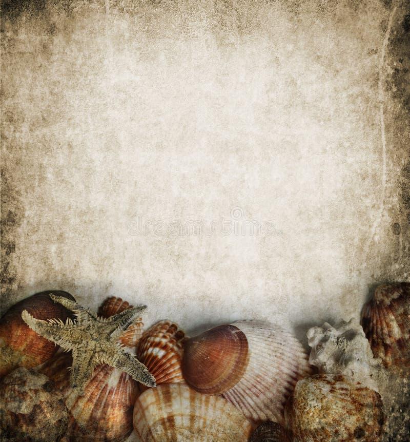Blocco per grafici dei Seashells fotografia stock