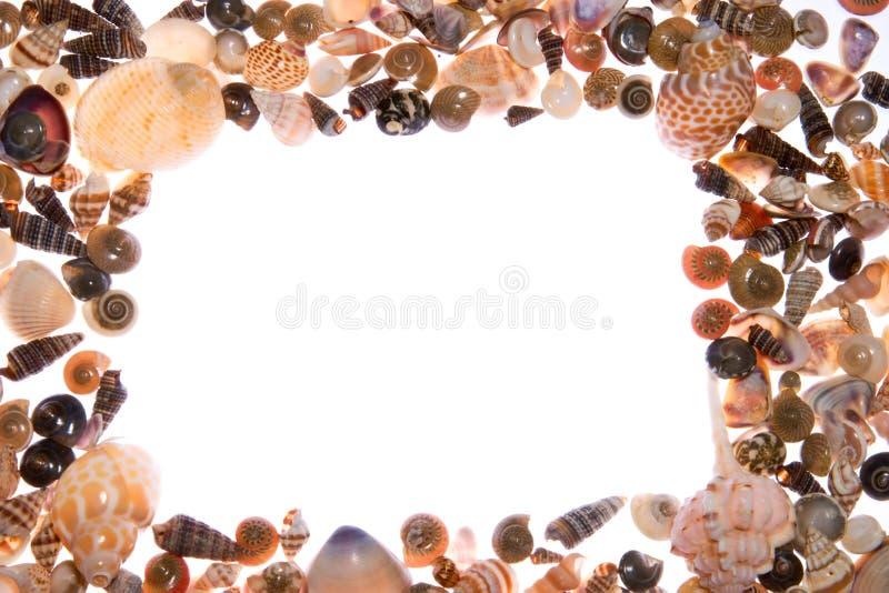 Blocco per grafici dei Seashells immagini stock libere da diritti