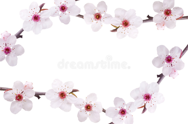 Blocco per grafici del fiore della sorgente fotografia stock