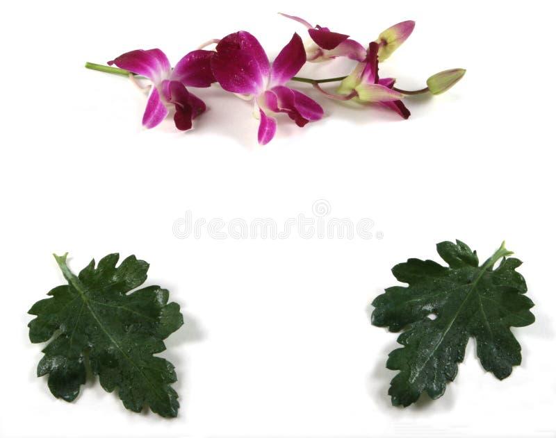 Blocco per grafici del foglio e dell'orchidea. immagini stock