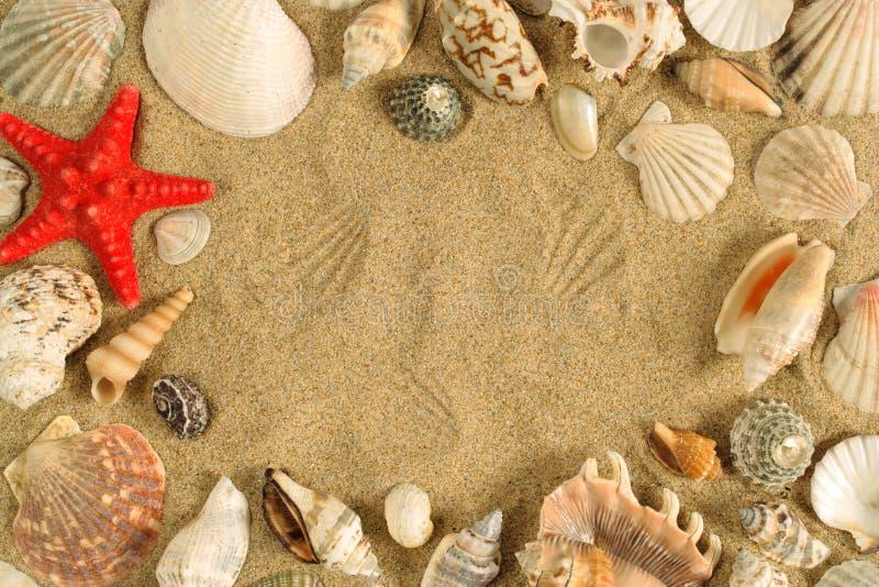 Blocco per grafici del Seashell fotografia stock libera da diritti