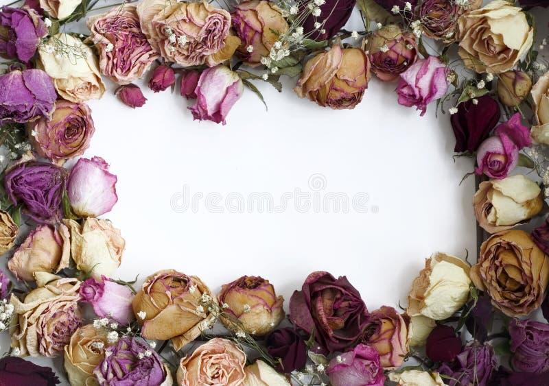Blocco per grafici delle rose (2) immagini stock
