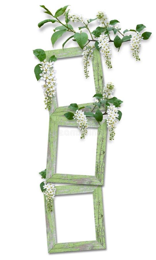 blocco per grafici di legno con le filiali della ciliegia di uccello fotografie stock libere da diritti