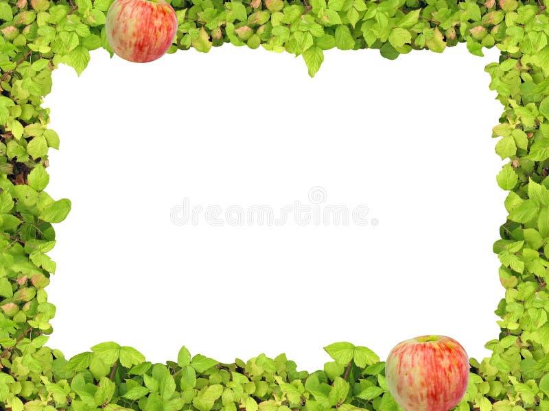 Blocco per grafici e mela verdi immagini stock libere da diritti