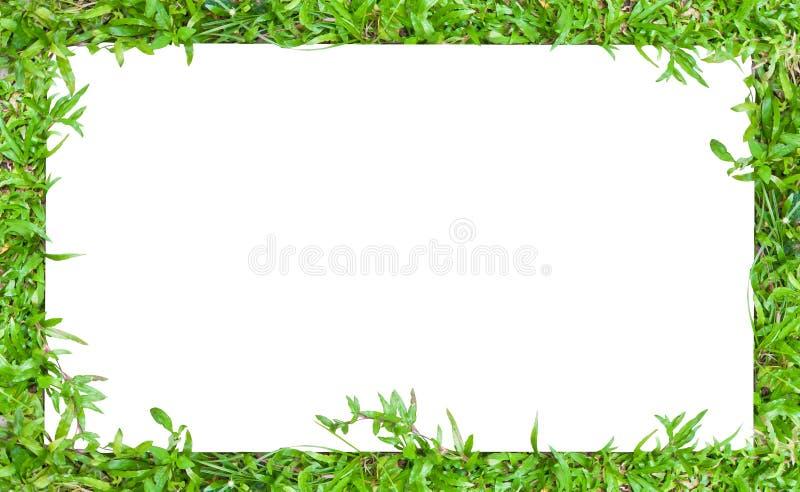Blocco per grafici orizzontale del bordo dell'erba fotografie stock libere da diritti