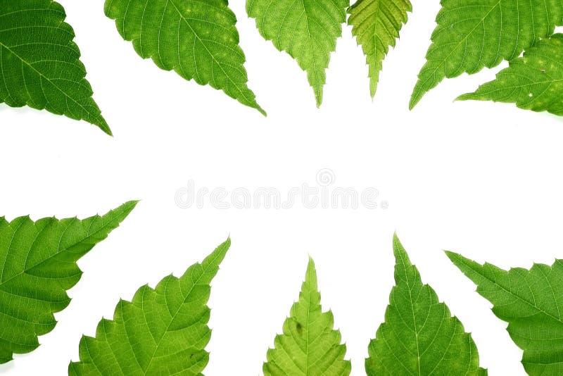 Blocco per grafici verde del foglio immagini stock libere da diritti