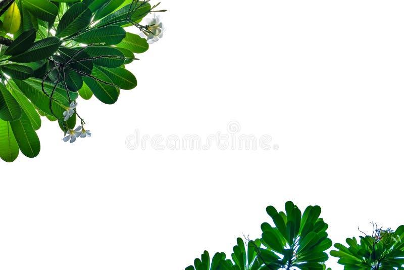 Blocco per grafici verde del foglio fotografia stock libera da diritti