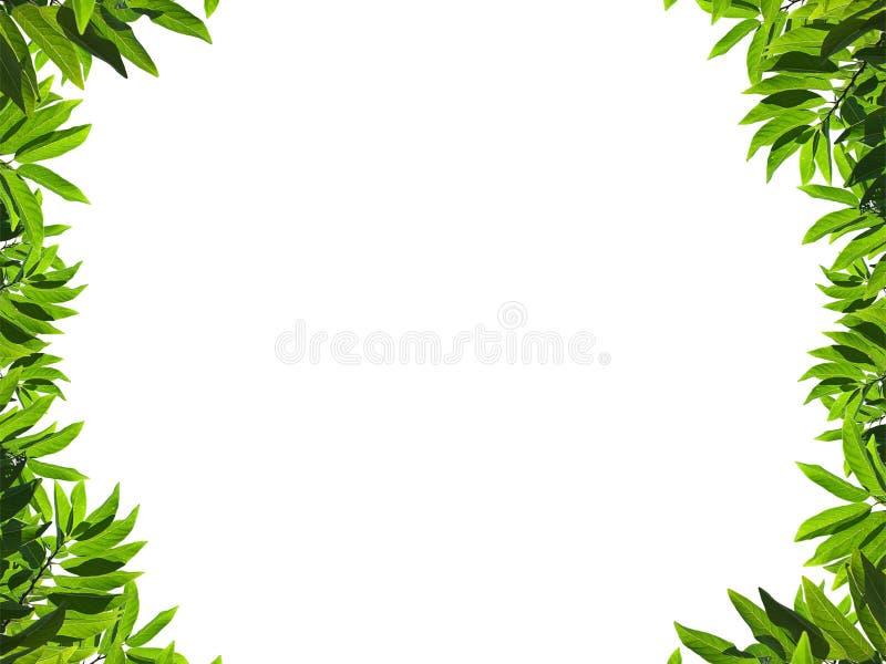 Blocco per grafici verde naturale del foglio fotografia stock