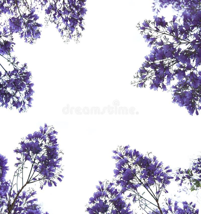 Blocco per grafici viola dei fiori fotografia stock libera da diritti