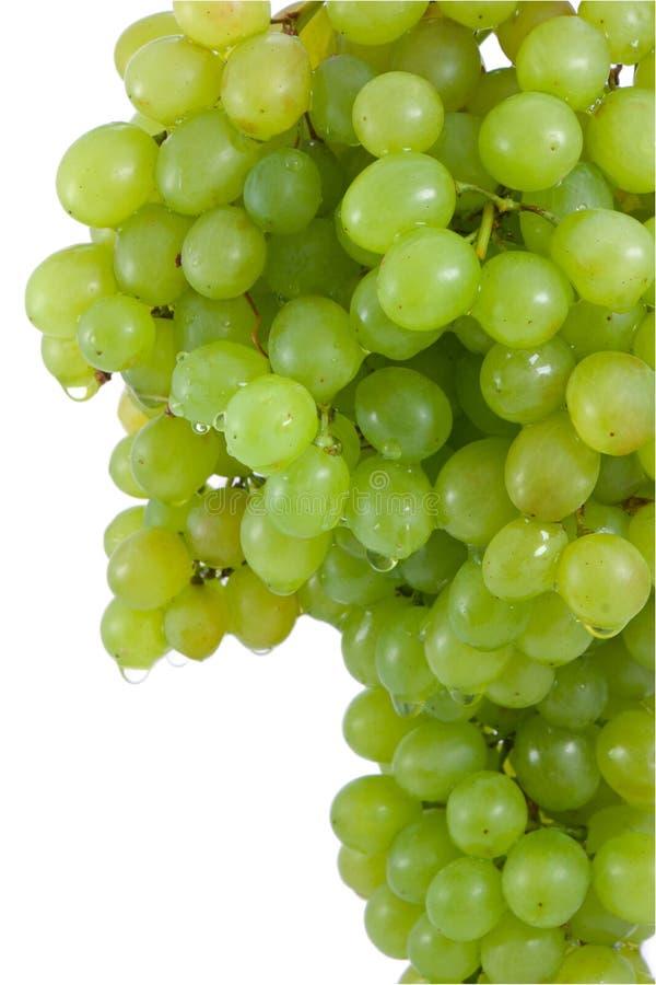 Block der reifen, grünen Trauben. lizenzfreies stockfoto