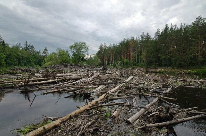 Blockage on the Lukh river (Russia). Blockage from logs and floating trees on the river Luh (Russia). The grey sky, a dark wood stock photos