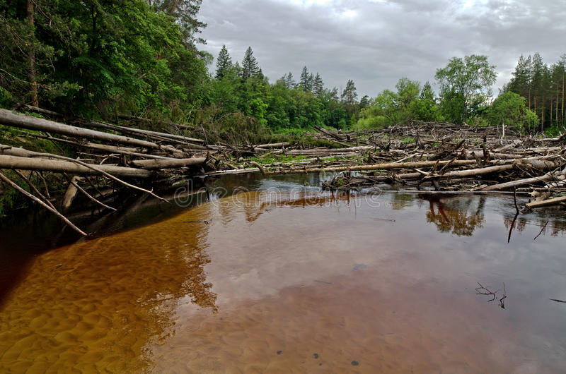 Blockage on the Lukh river (Russia). Blockage from logs and floating trees on the river Luh (Russia). The grey sky, a dark wood stock photography