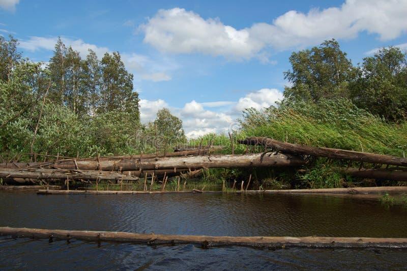 Blockierung von den toten Bäumen über dem Fluss stockbild