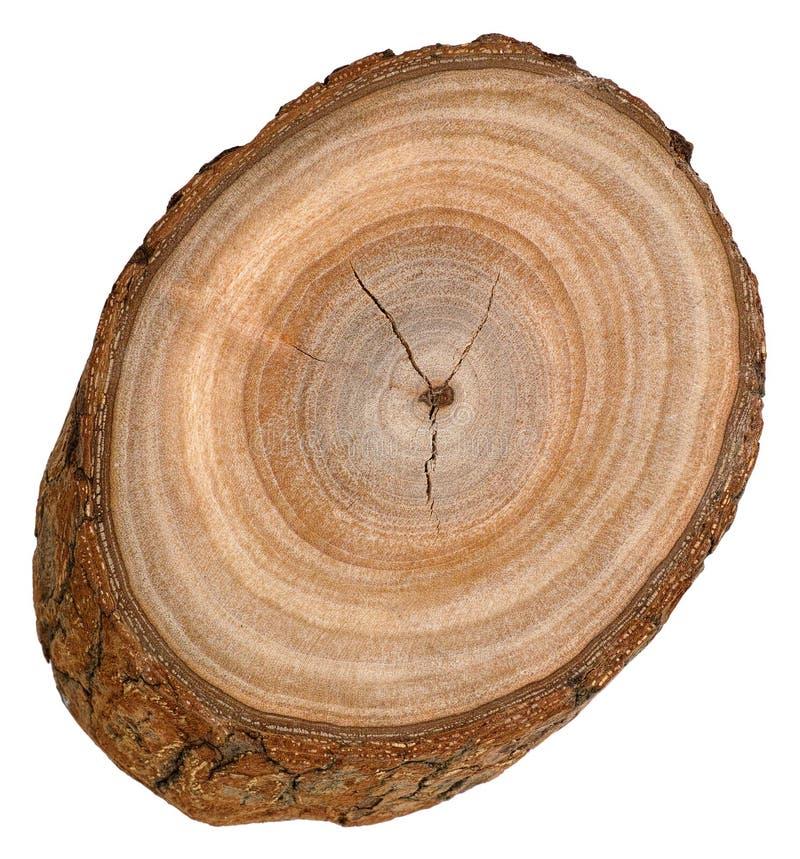 Bloco da árvore de cânfora imagem de stock royalty free