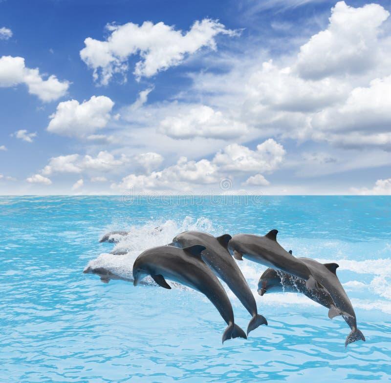 Bloco de golfinhos de salto imagem de stock royalty free