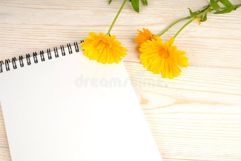 Bloco de notas e flores amarelas na tabela branca fotos de stock royalty free