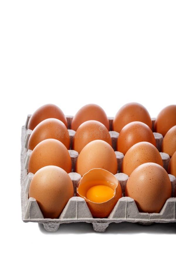 Bloco de ovos marrons da galinha no recipiente do cartão isolado no branco imagem de stock