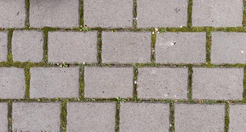 blocos cinzentos do tijolo com grama verde nas emendas fotos de stock