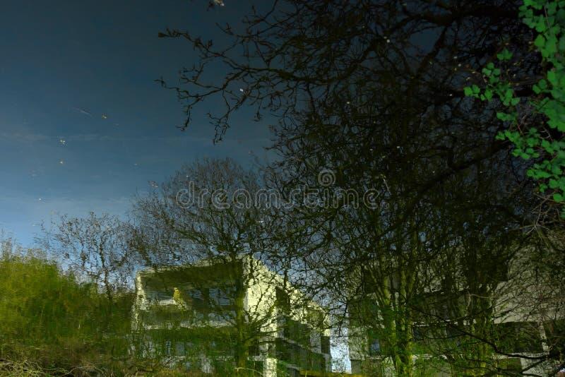 Blocos de construções e árvores brancos distantes do inverno dos arty da papoila fotografia de stock royalty free