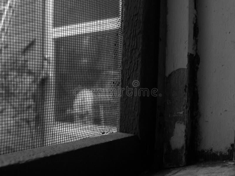 Blocus de moustique photographie stock