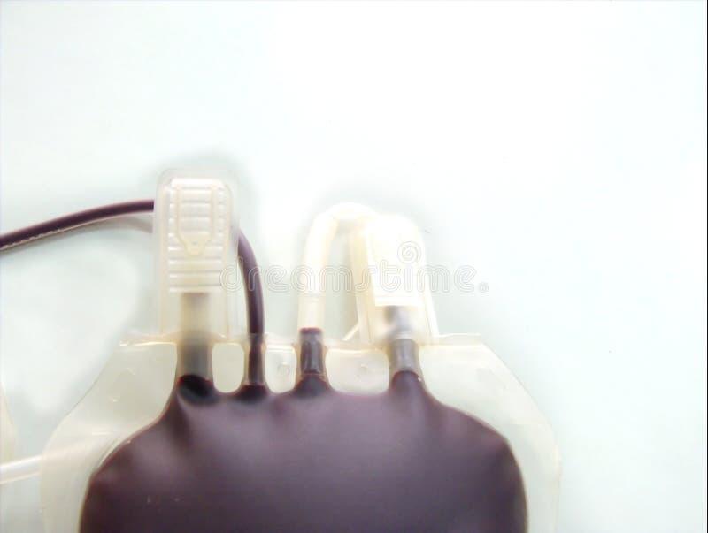 Blod humano foto de archivo