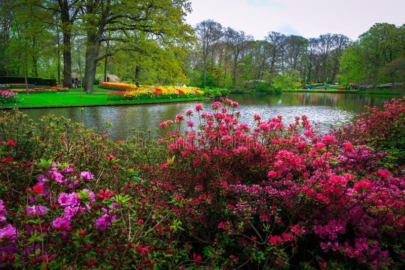 Blodazaleor och färgstarka vårblommor i Keukenhof-parken, Nederländerna royaltyfri foto