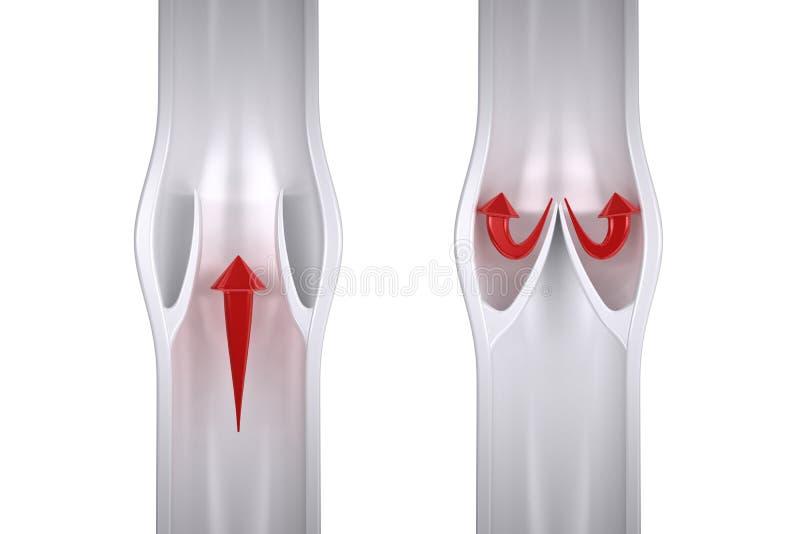Blodflöde i åder - tvärsnitt av åder vektor illustrationer