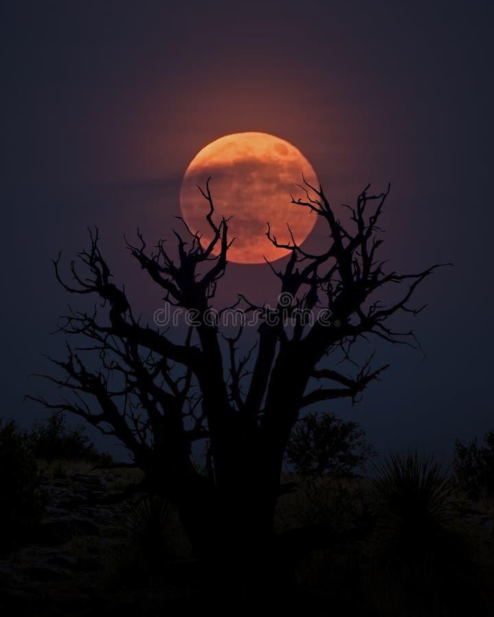 Blodmåne med det döda trädet royaltyfria foton