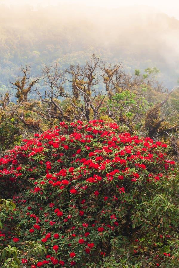 Blodskog i Rhododendron på hösten fotografering för bildbyråer