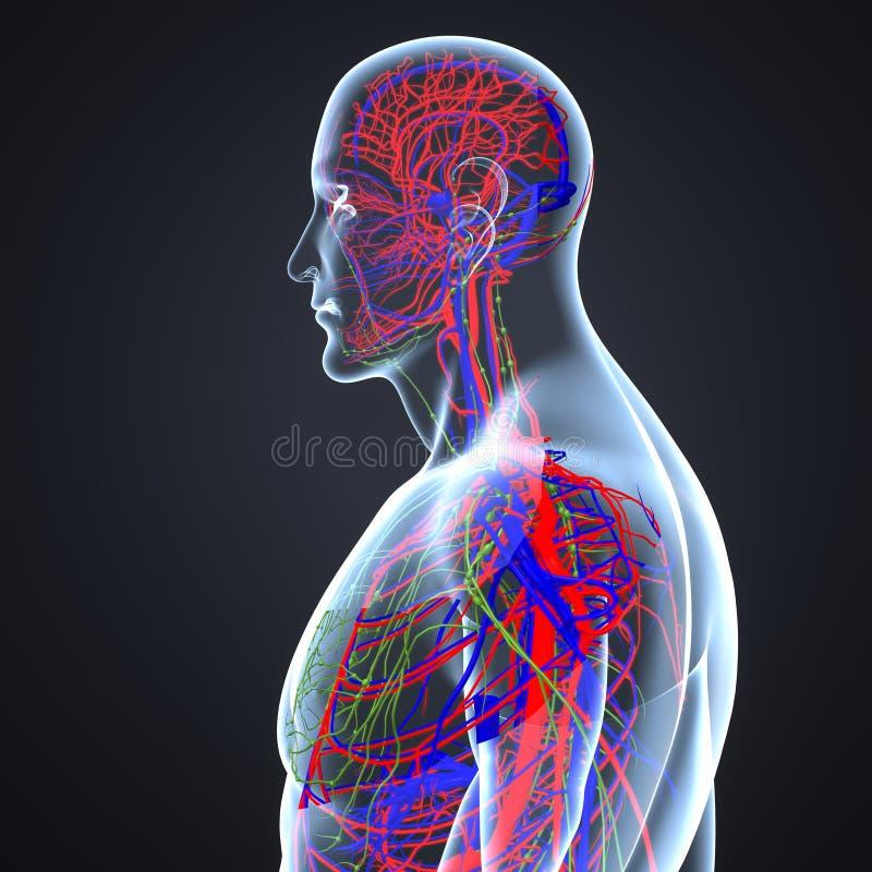 Bloedvat en Lymfeknopen met Lichaams Zijmening vector illustratie