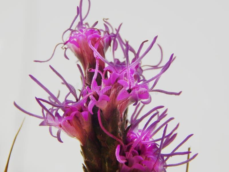 bloei stock afbeelding