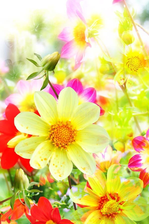 Bloei achtergrond van gele en rode kleuren royalty-vrije stock fotografie