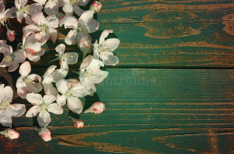 Bloei de lenteachtergrond stock foto's