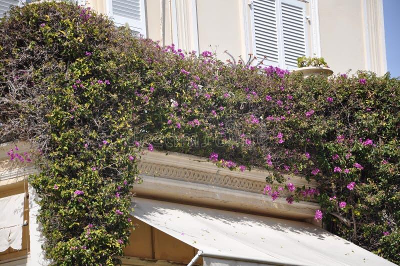 Bloeiend balkon Monaco royalty-vrije stock afbeelding