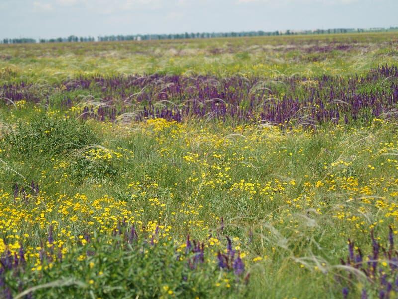 Bloeiend gebied met kleurrijke bloemen stock fotografie
