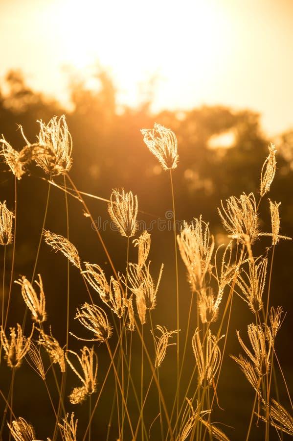 Bloeiend gras in gefiltreerde wijnoogst royalty-vrije stock fotografie