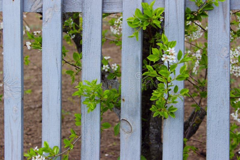 Bloeiend Installatie en Gray Wooden Fence Aard, het Tuinieren Concept De achtergrond van de aard stock fotografie