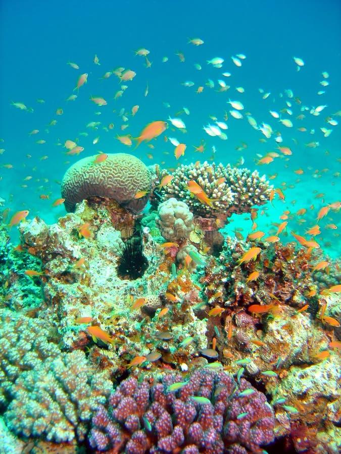 Bloeiend koraalrif stock foto's
