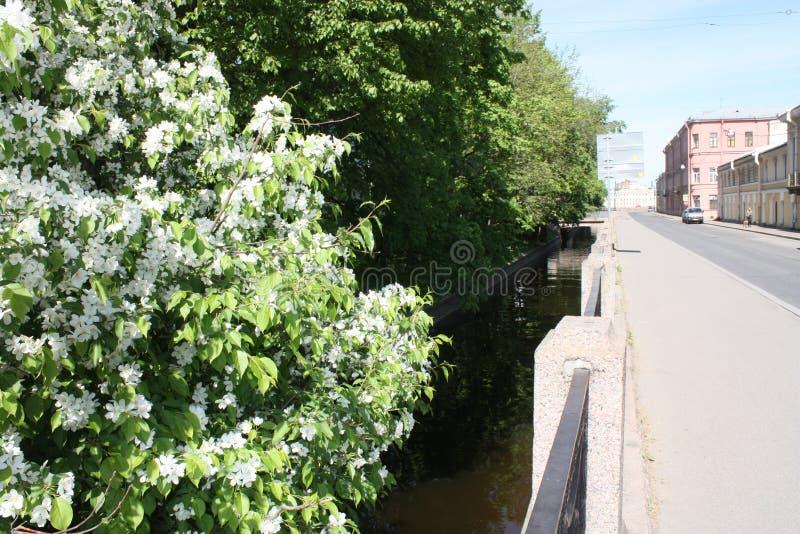Bloeiende Apple-bomen dichtbij het kanaal stock fotografie